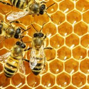 The Healing Secrets of Honey-bees at work
